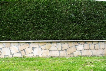 How to Trim Overgrown Hedges