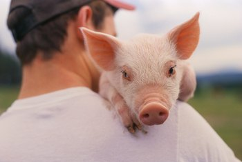 How to Raise Hogs for Profit on a Small Farm