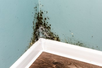 How to Kill Mold & Mildew in the Fridge