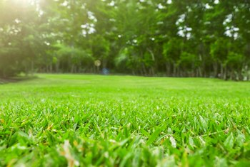 How to Use Diatomaceous Earth for Lawns