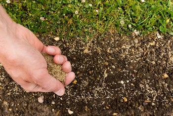 How to Calculate Grass Seed for Overseeding