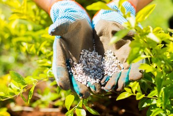 Problems of Overusing Fertilizers