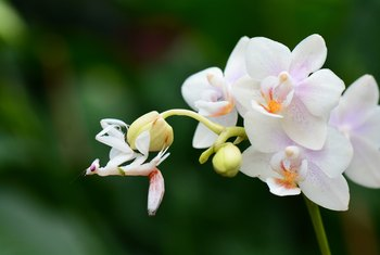 White Stuff on Orchids