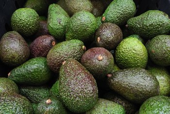 How to Graft Avocados