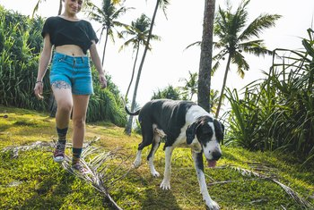 The Toxicity of Palm Tree Leaves for Pets