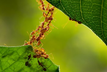 Homemade Pesticides to Get Rid of Ants