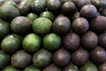 How Much Water Does an Avocado Tree Consume?