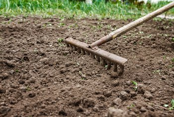 How to Improve Garden Soil With Charcoal