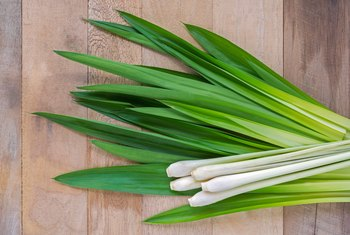 The Health Benefits and Properties of Lemongrass