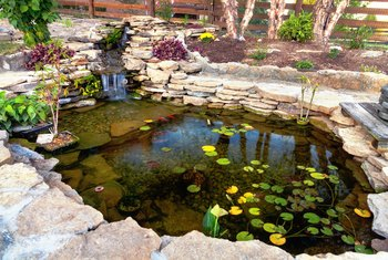 What Is a Safe Way to Kill Weeds Around My Pond That Won't Harm My Fish?