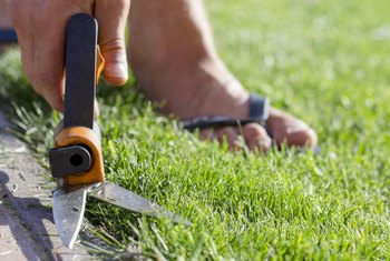 How to Cut the Grass Without a Lawnmower