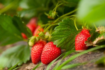 How to Acidify Soil for Strawberries