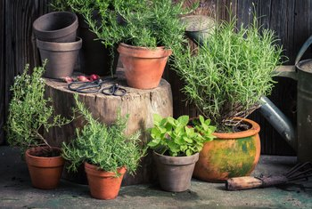 What Is the Best Mix of Herbs to Grow Together in a Pot?