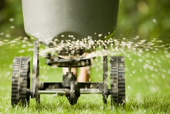 How to Apply Lawn Seed & Fertilizer Together