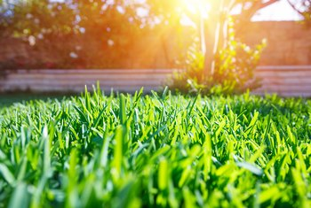 How to Seed a Lawn by Letting the Grass Grow