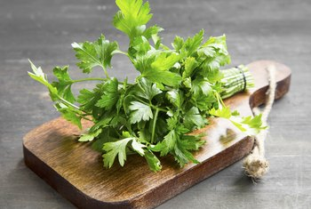 Is Too Much Intake of Parsley Bad?