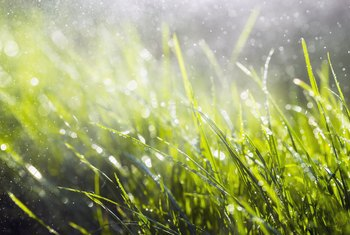 Plants to Soak Up Wet Spots on Your Lawn