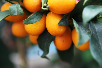 When Should I Copper Sulfate My Fruit Trees?