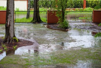 How to Change a Swampy Back Yard