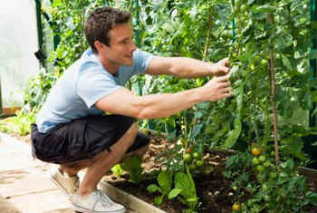 Tall, sun-loving tomatoes will happily share ground space with a number of other plants.