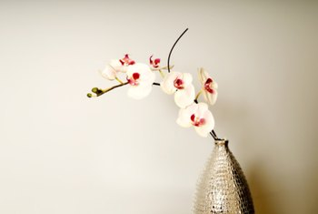Pruning orchids can encourage additional blooming.