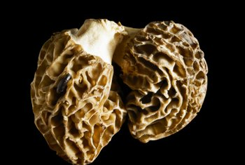 White truffles require very specific growing conditions.
