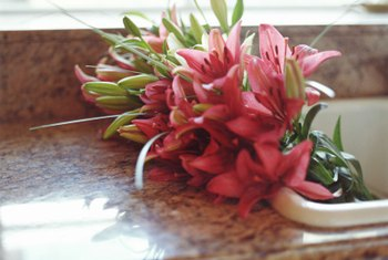 Stargazer lilies are available all year-round for a price.