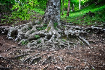 What Are the Dangers of Cutting Tree Roots?