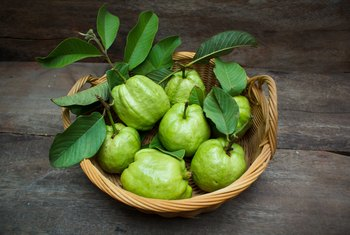 The Health Benefits of Guava Leaf Tea