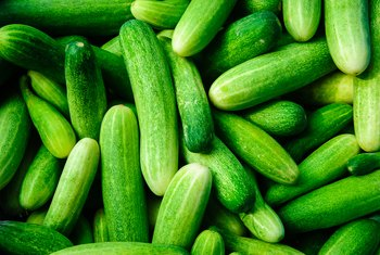 How Long Does It Take Cucumber Plants to Produce Fruit?