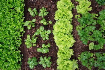 Can Fresh Herbs From the Supermarket Be Replanted?