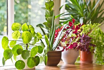 How to Get Rid of Sticky Film From Plants Indoors