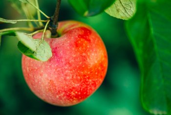 How Often Do Apple Trees Need to Be Sprayed in a Season?