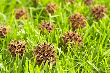 The Best Method for Removing Sweetgum Balls From the Lawn