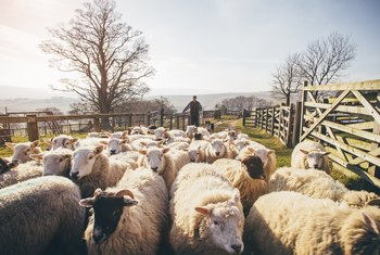 What Are the Duties of a Shepherd?