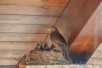 How to Keep Birds From Nesting on Porches