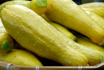 How to Tell If a Yellow Squash Is Ready to Harvest?