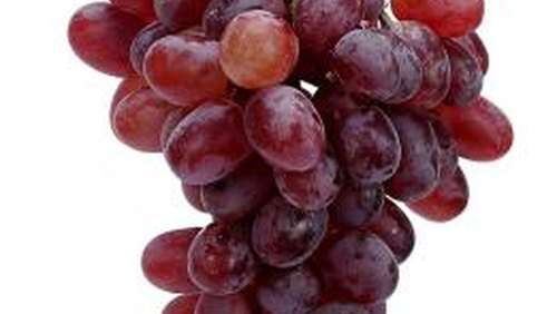 <p>Grow your own Candice grapes at home.</p>