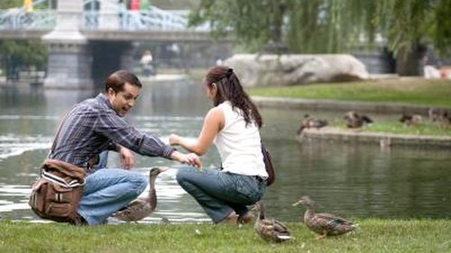 <p>Ducks are entertaining in a park but can be a garden nuisance.</p>