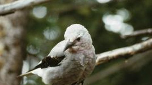<p>You can use real tree limbs to make a fake tree for birds to perch on in your yard.</p>