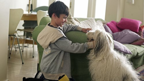 <p>Boy and dog in living room</p>