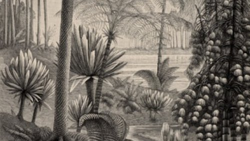 <p>Gymnosperms dominated the world millions of years ago.</p>