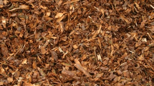 <p>Amend your planting hole for native azaleas with an acidic material such as pine bark mulch.</p>