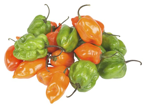 Habanero peppers come in a variety of colors.