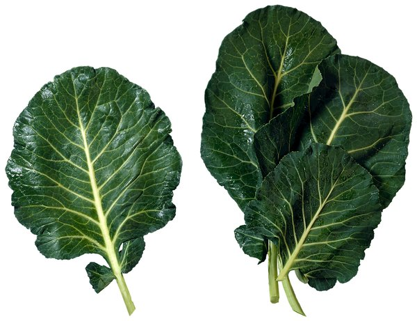 Collard greens are a good source of iron.