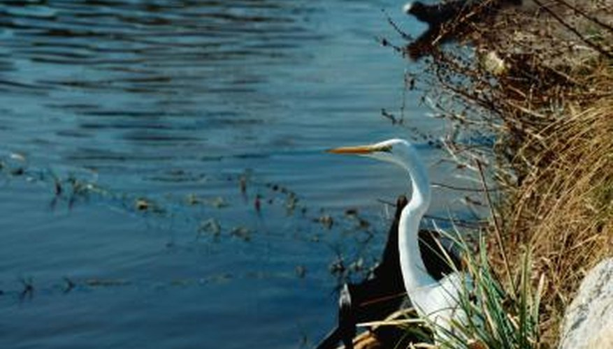 Salaries For Wildlife Ecologists Work Chron Com